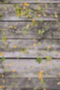 كاميرا ويب الإباحية المدقع