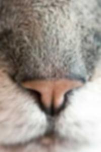 ايفا لارو صور عارية