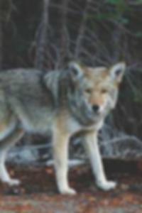 صور عارية تماما من جيسيكا ألب